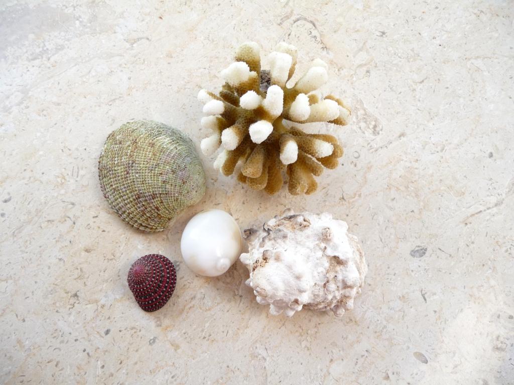 Коралл и ракушки